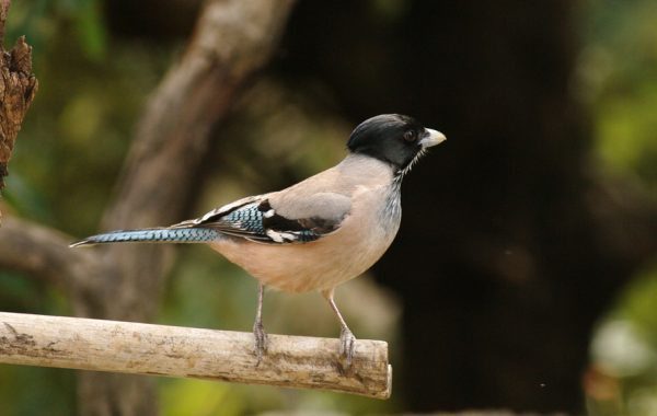 Birding Trip