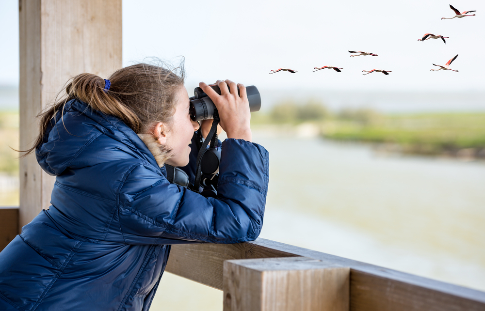 Benefits Of Bird Watching